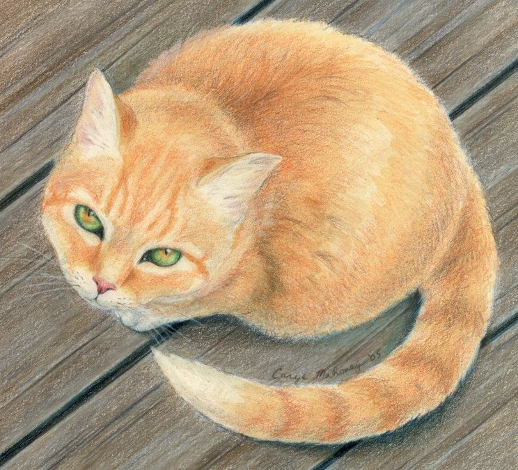 Orange Tabby Cat With Green And Gold Eyes Sitting On Wooden Surface And Looking Up At Viewer Art Reproduction Print Me Orange Tabby Cats Tabby Cat Cats