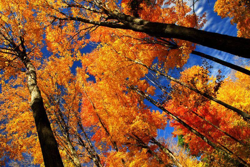 Fototapete Herbstbäume Tapeten & Farben Fototapeten