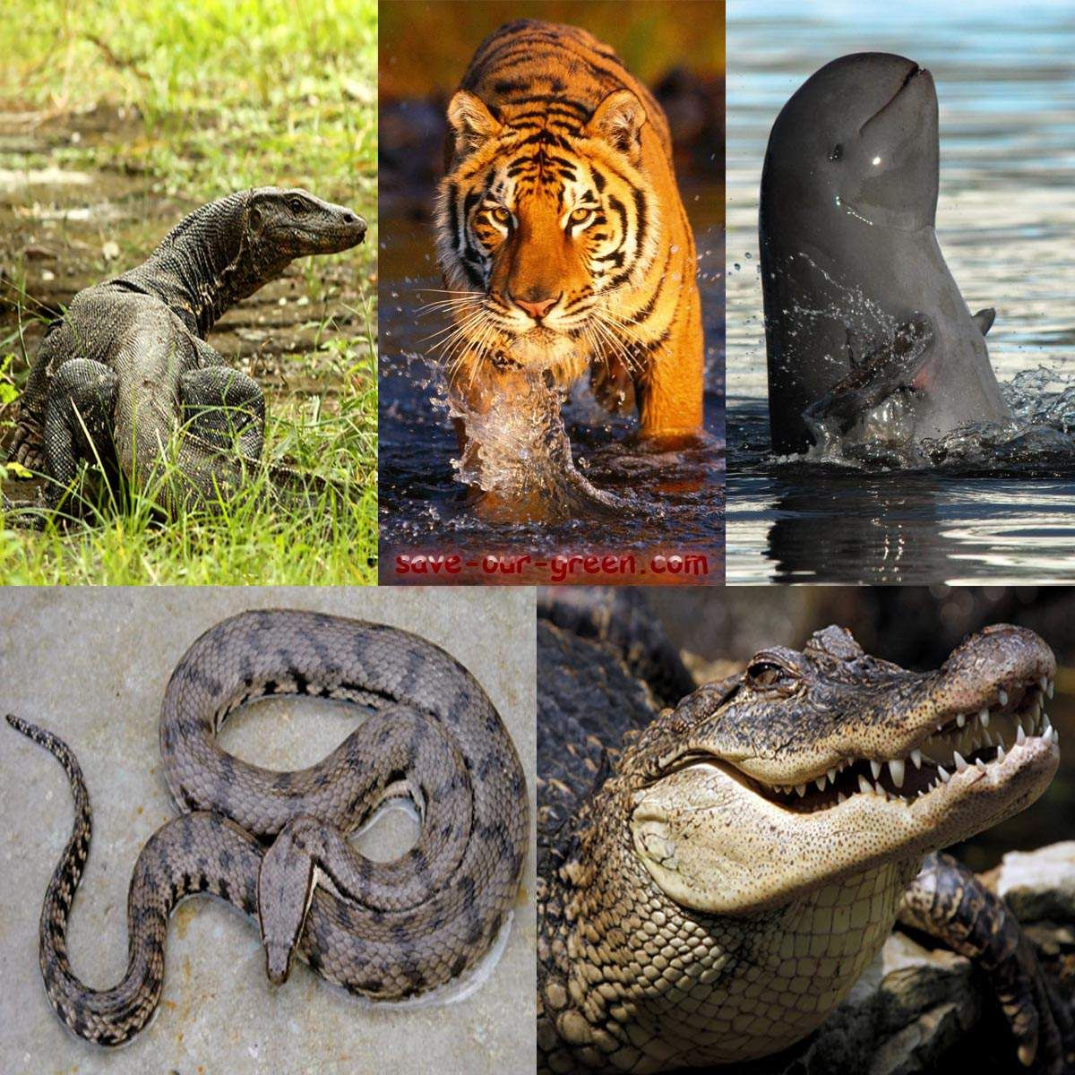 Largest mangrove forest Sundarbans Different types of