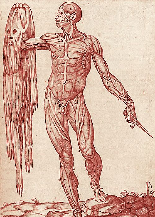 medical illustrations | Medical Illustration | Medical