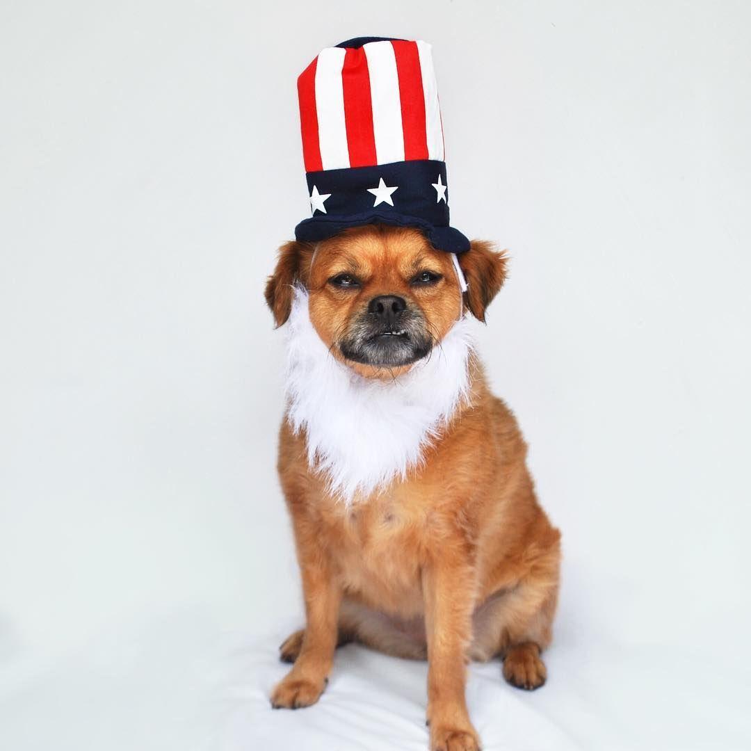 ed09571ad04 Dog Costume