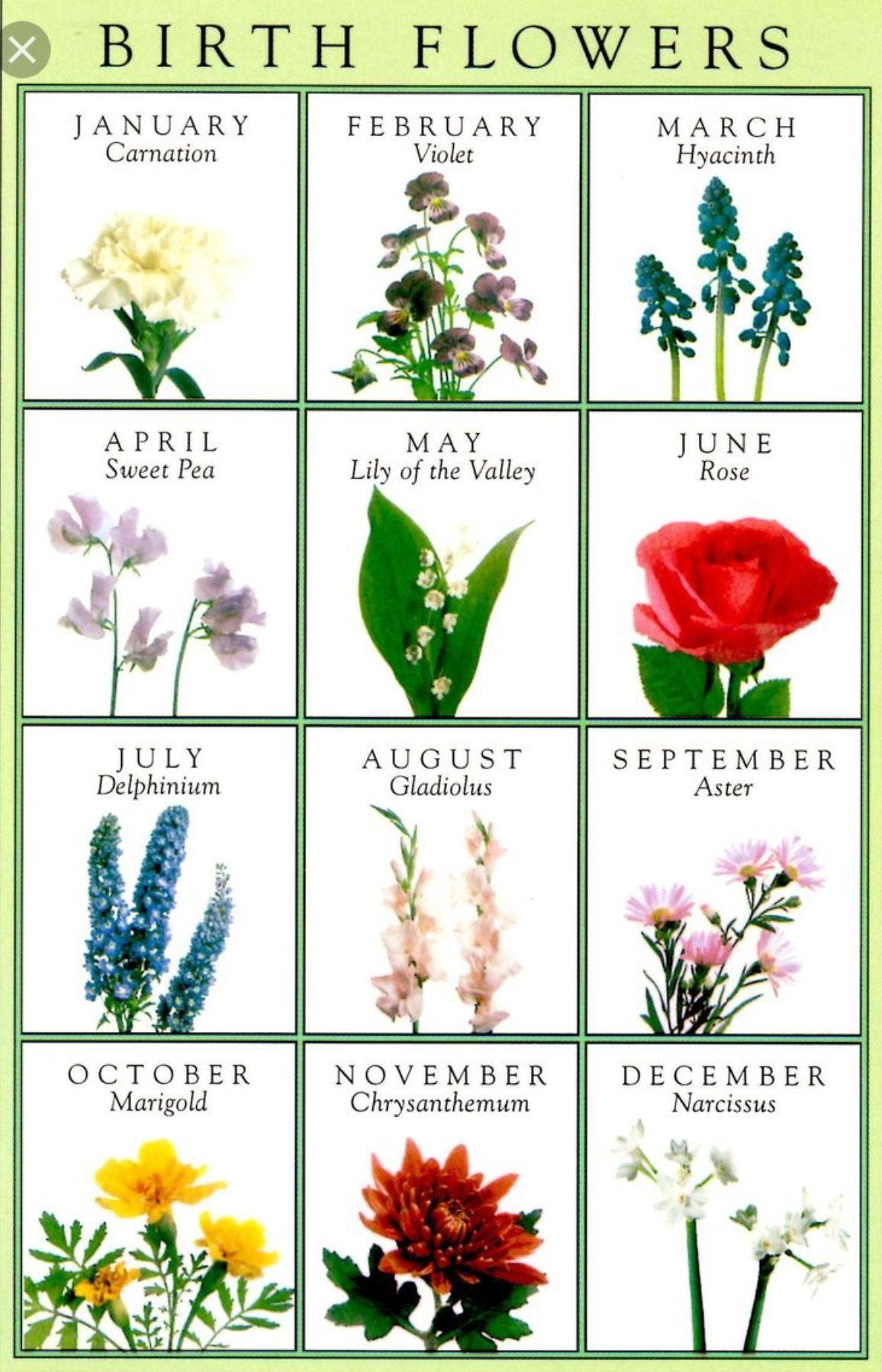 Birth flowers Birth flower tattoos, Birth month flowers