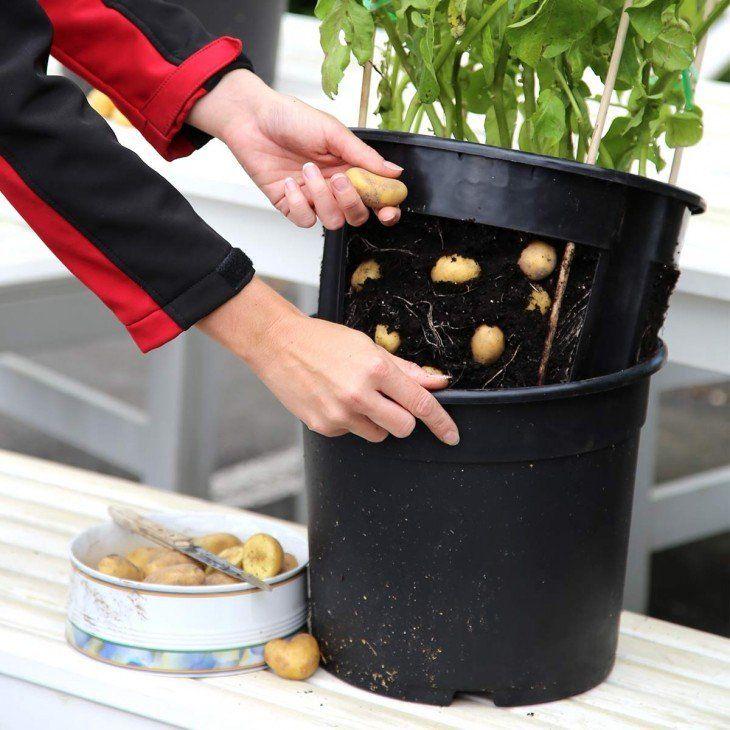 potatopot anzuchtset jetzt bestellen bei gem se f r beet und balkon garten pflanzen und. Black Bedroom Furniture Sets. Home Design Ideas