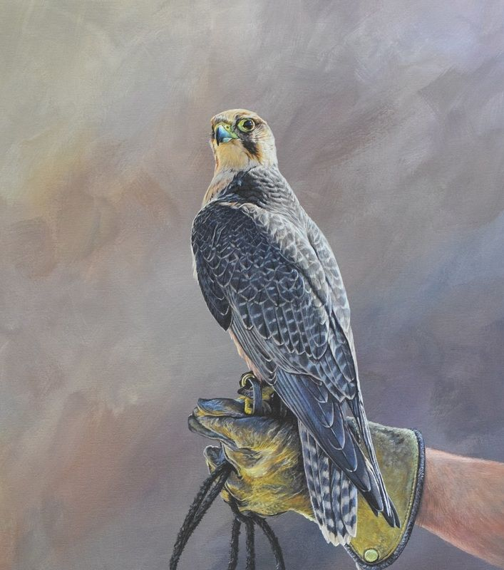 Lanner Falcon on Glove 20 x 28