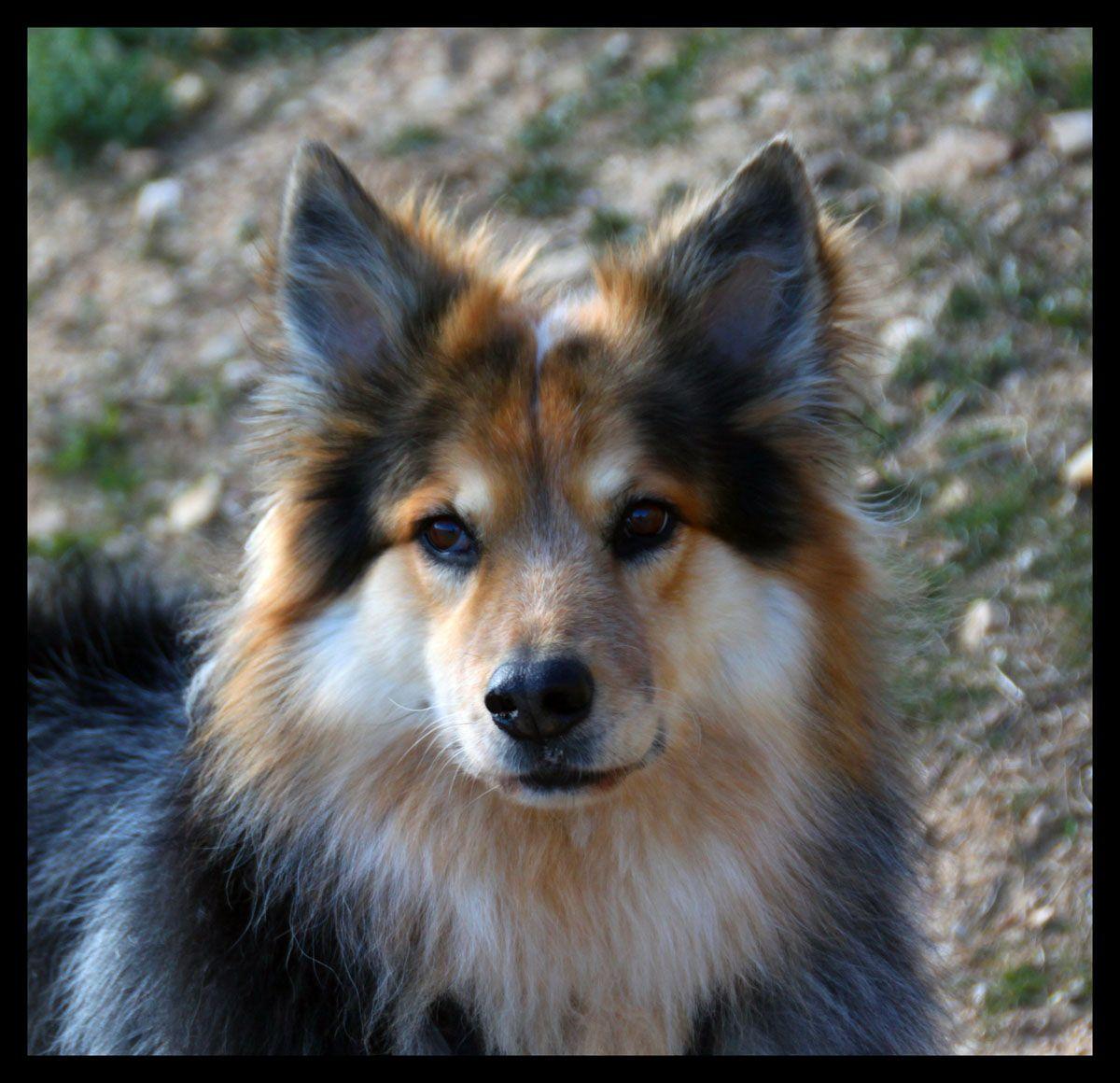 sooo cuteeee Dogs, Animals,