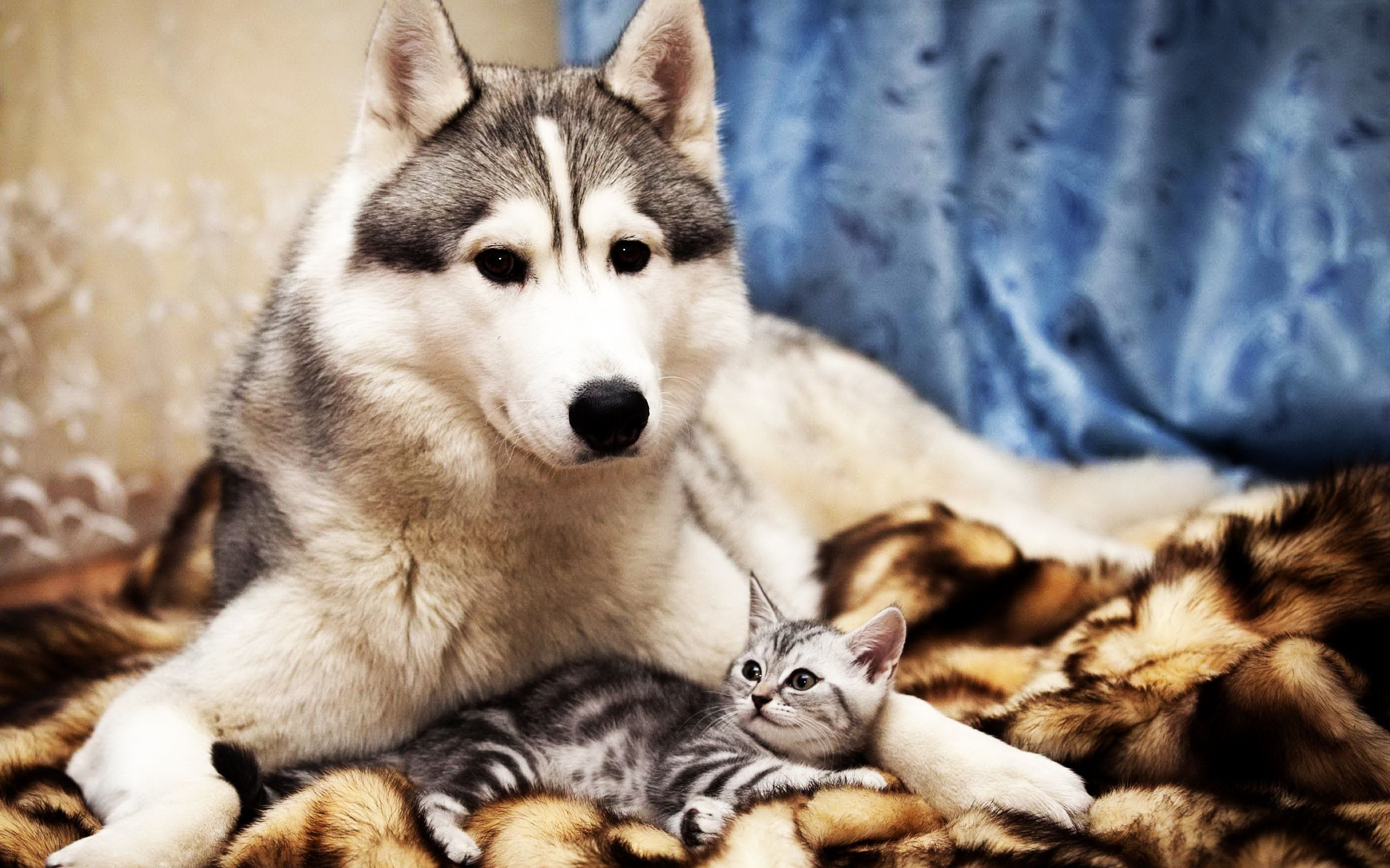 Dog and cat friends bff 2560x1600