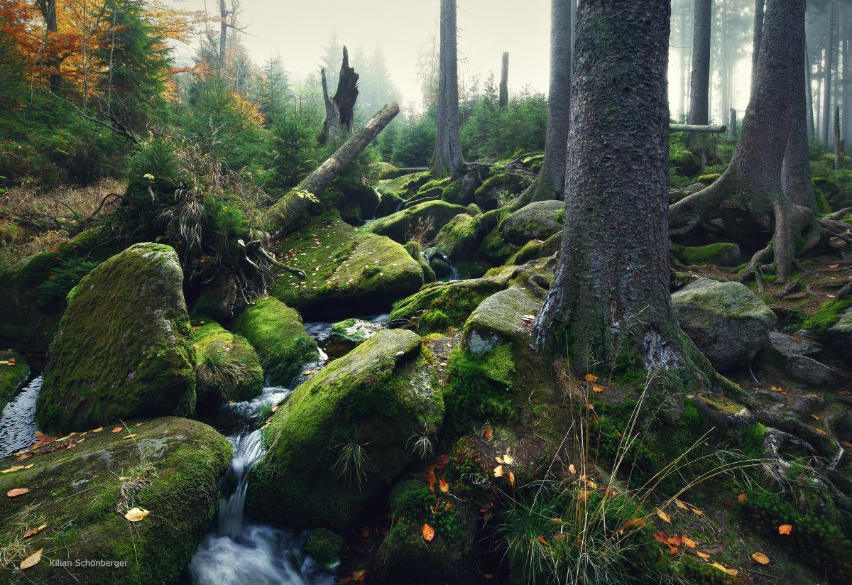 "Mountain Creek - <a href=""http://instagram.com/kilianschoenberger/"">@kilianschoenberger I N S T A G R A M</a> Bavaria, Germany <a href=""https://www.facebook.com/pages/Landscape-Photography-by-Kilian-Schoenberger/304631876263547"">L A N D S C A P E P H O T O G R A P H Y facebook</a>"