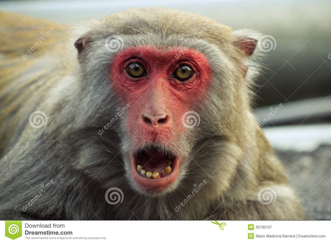 Shocked Animals images, Monkey, Stock photography free