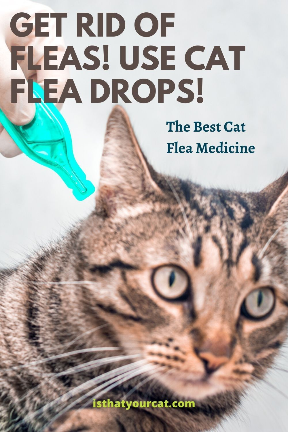Cat Flea Drops The Best Flea Medicine For Cats In 2020 Cat Fleas Flea Medicine For Cats Cat Medicine