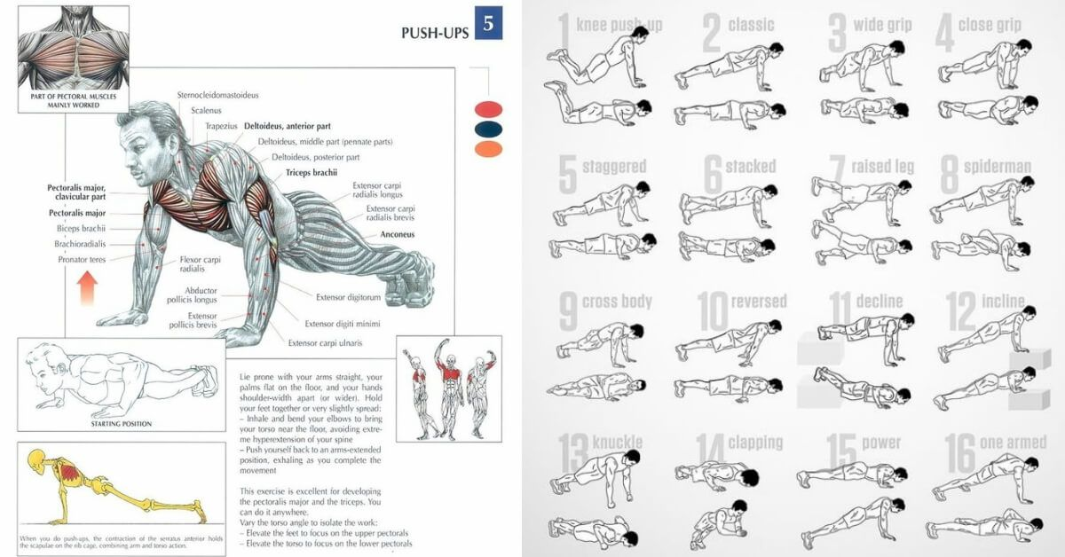 5 Exercises To Develop Perfect Obliques Gymguider Com Push Up Workout Bodyweight Workout Workout Plan Gym