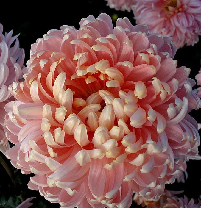 Zehrs Wedding Flowers: Pin On Landscaping Ideas