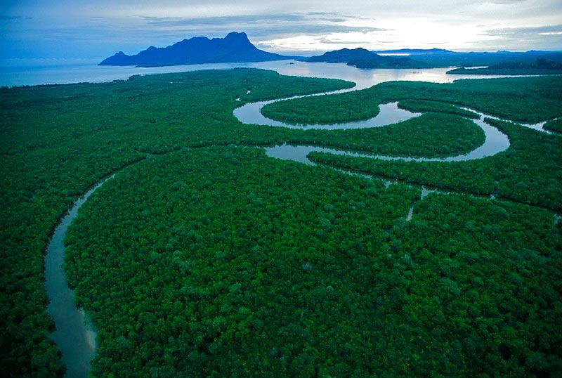 An Aerial View Of The Salak River Borneo Rain Forest