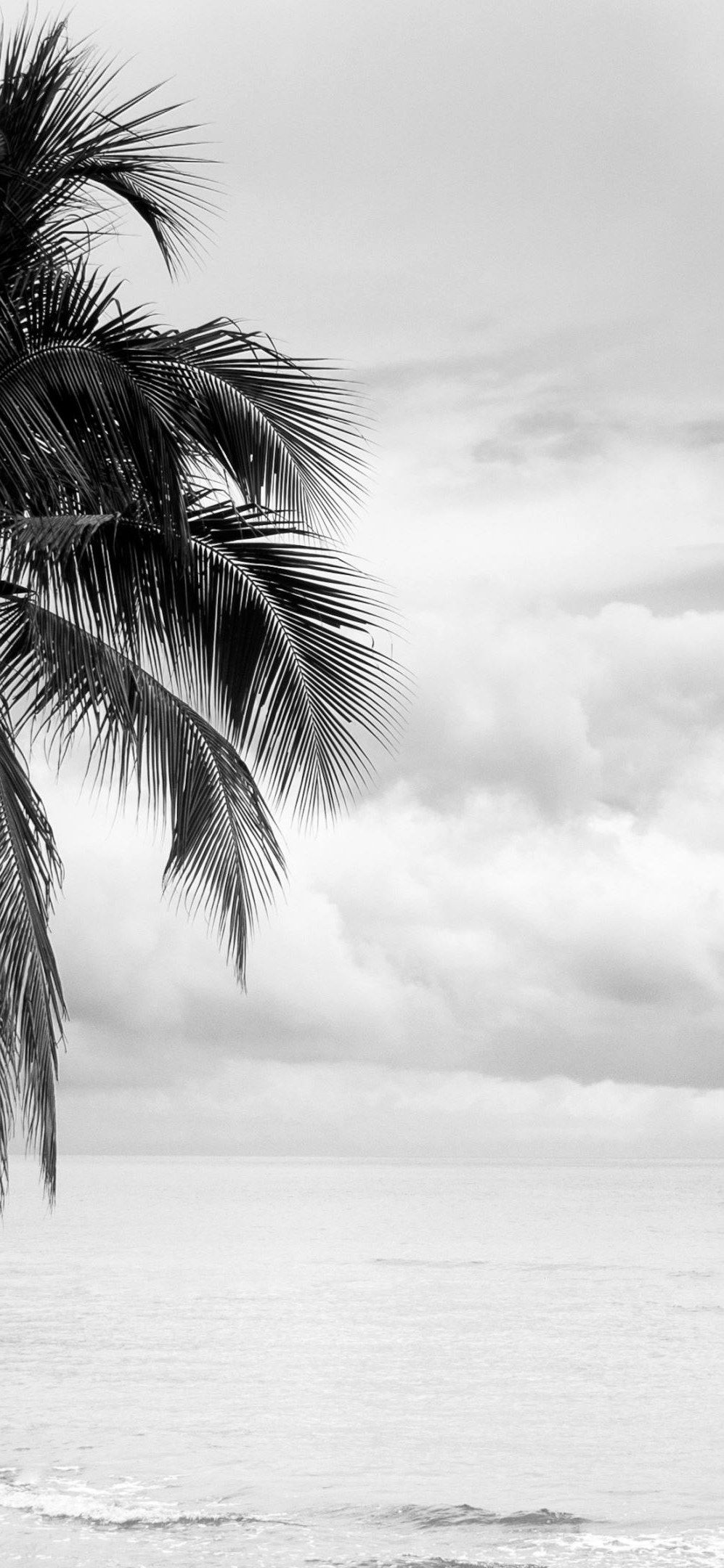 Iphone X Wallpaper Coconut Tree Black And White Wallpaper Hd Black And White Wallpaper Black And White Wallpaper Iphone White Wallpaper For Iphone