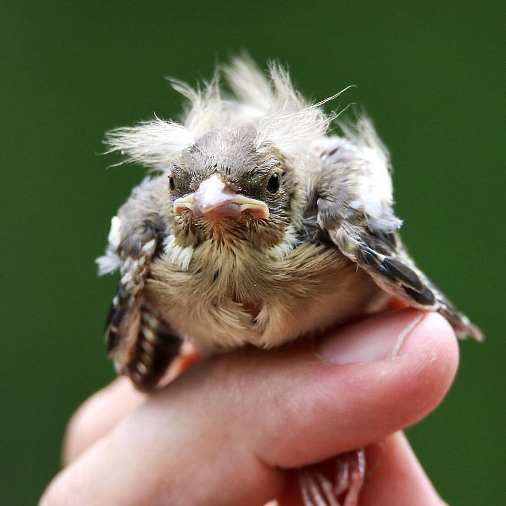 Heb je een #badhairday beland je ook nog op de P-plaats van ons @staatsbosbeheer kantoor Gelukkig legt @vandenberg.klaas je op een veilige plek. #totherescue #animalsofinstagram #whywelovenature #naturelovers #nature #beleefnederland #bird #bird #young #v