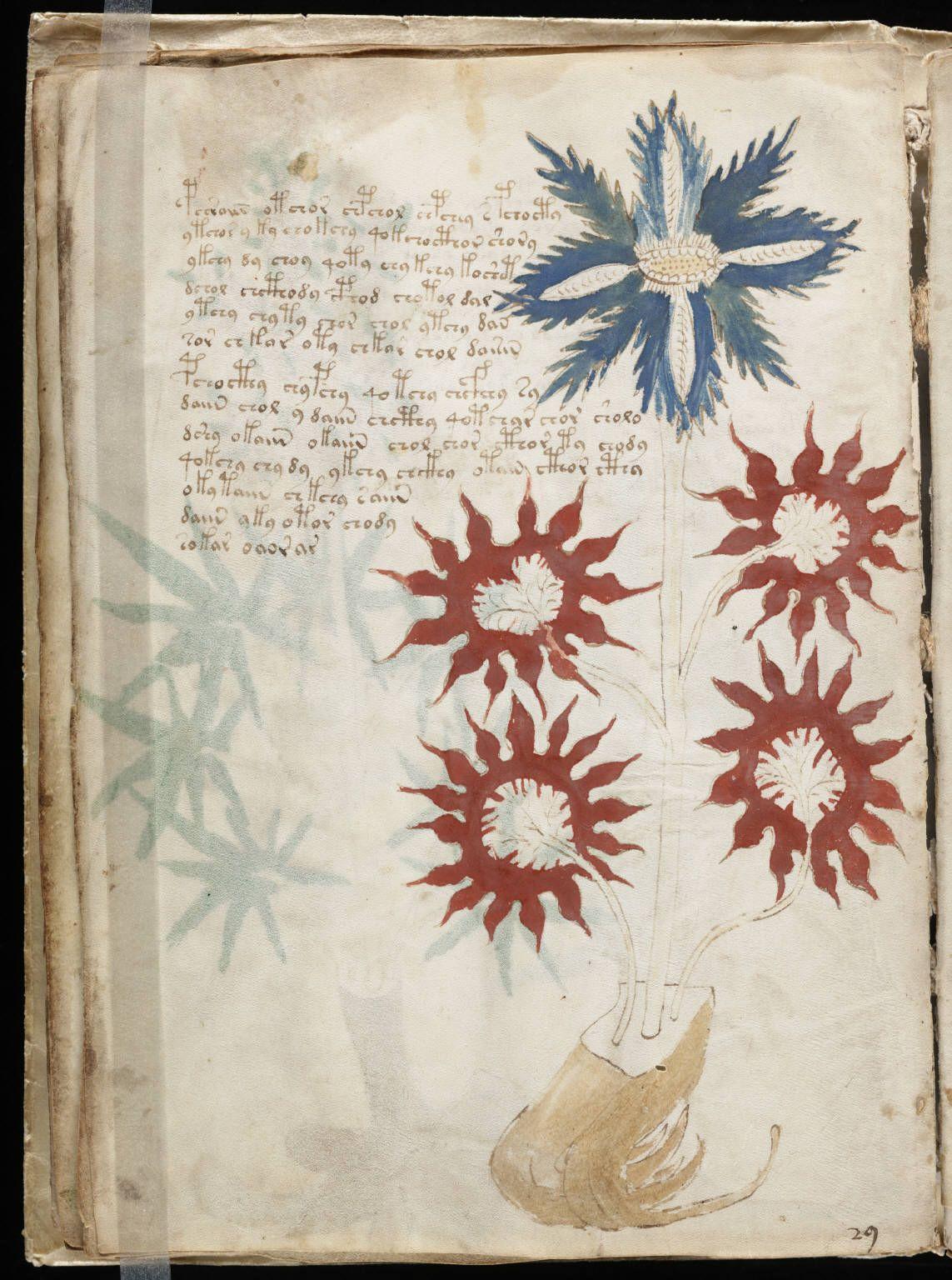 pg32 of the mysterious Voynich manuscript