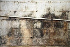 How To Clean Mold Off Basement Concrete Walls
