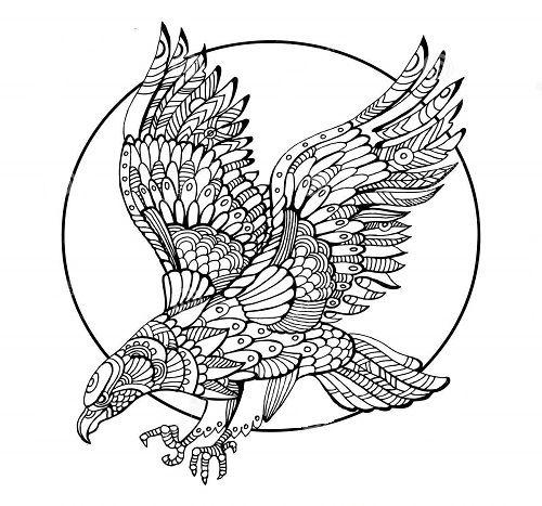 ausmalbilder falke  mandala ausmalen vogel malvorlagen