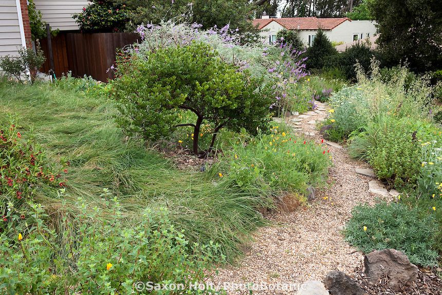 California Native Plant Garden Design path leading to backyard permeable patio with firepit and chairs with well mulched california native plants Gravel Path Through California Native Plant Front Yard Garden With No Mow Meadow Lawn Substitute