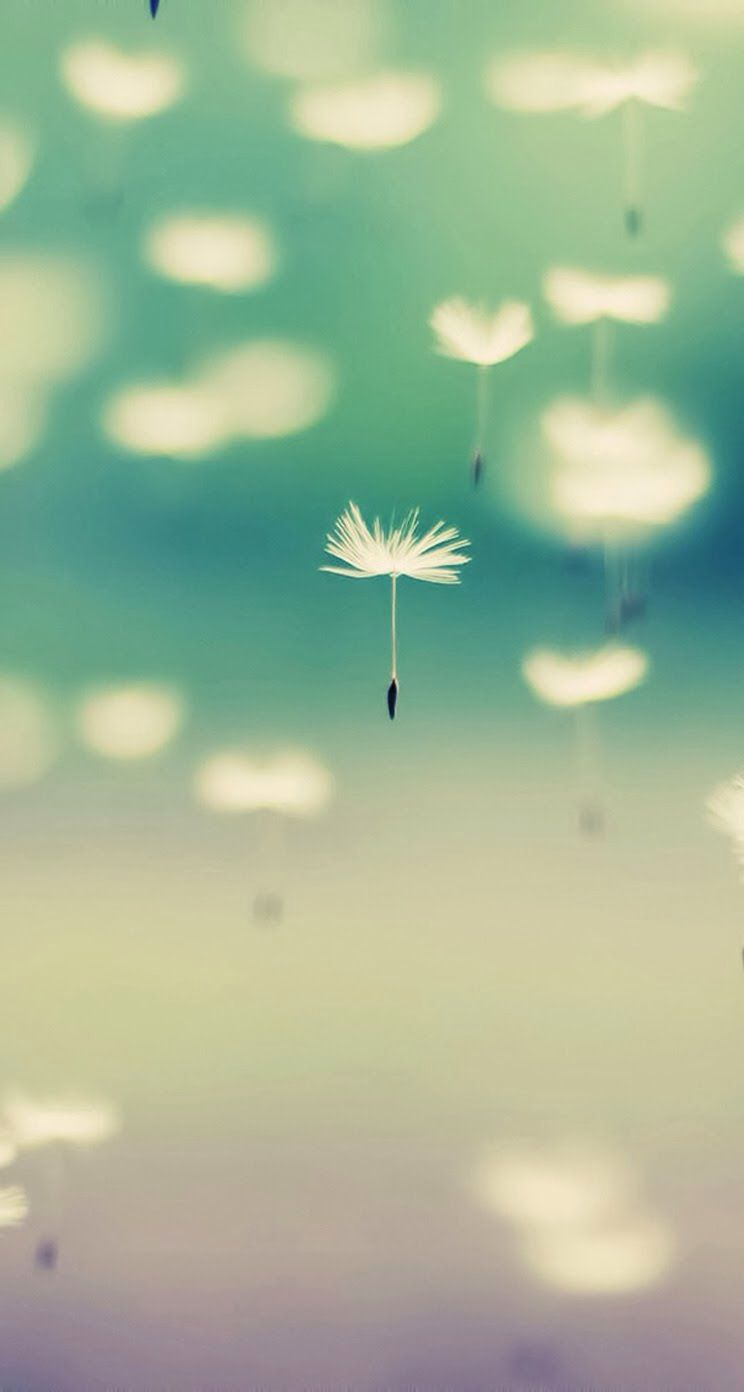 Dandelion Flower Iphone Wallpaper Mobile9 Littl3 D3vil