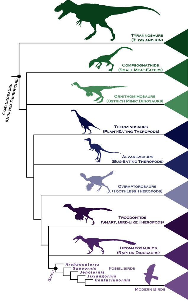 A Simple Chart To Help You Understand How Birds Evolved From Dinosaurs Biology