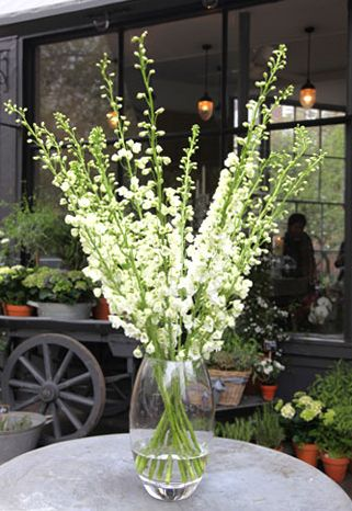 Flower Arranging by Vase: The Tall Rounded Vase