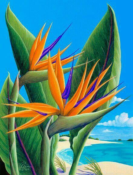 Ave Del Paraiso Una Preciosidad Q Nos Da La Naturaleza Pinturas Hermosas Arte Tropical Arte En Lienzo