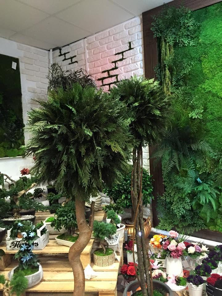 Pomysl Na Prezent Dla Dziewczyny Dla Mamy Drzewko Bonsai Cena Everlasting Flowers Plants Flowers