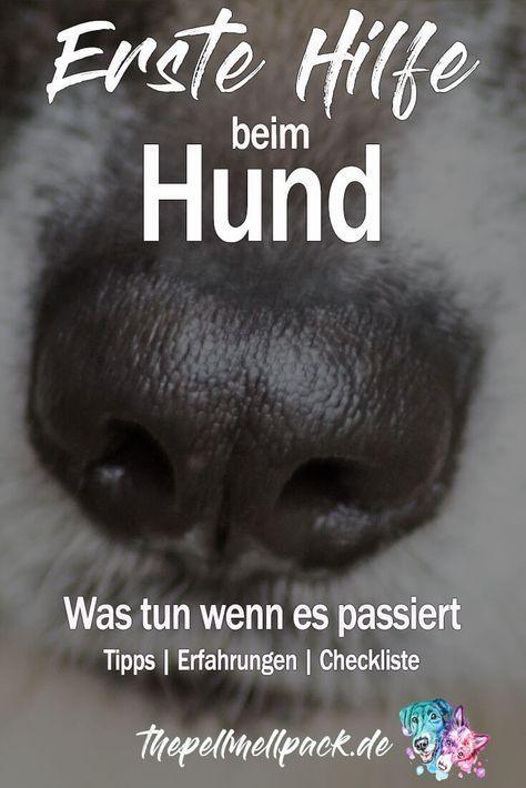 Erste Hilfe im Notfall (mit Bildern) Hunde, Erste hilfe