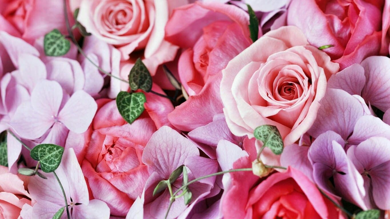Pin by on pinterest all flowers blooming flowers beautiful roses most beautiful pink rose flower pretty in pink rose tea flower wallpaper cottage izmirmasajfo