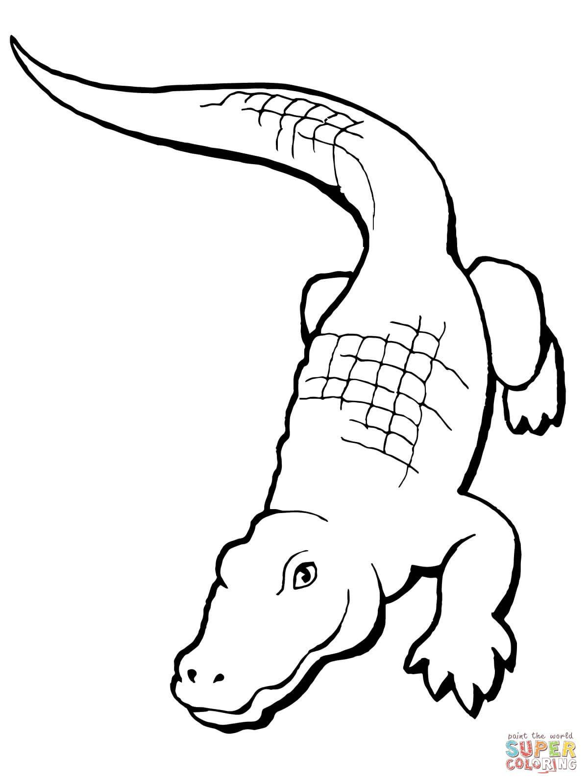 Cute Alligator Coloring Pages Realistic Alligator Coloring Page In 2020 Coloring Pages Cute Coloring Pages Jesus Coloring Pages
