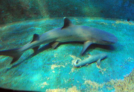 The Scoop: Shark Virgin Welcomes Baby! | Shark, Nurse ...