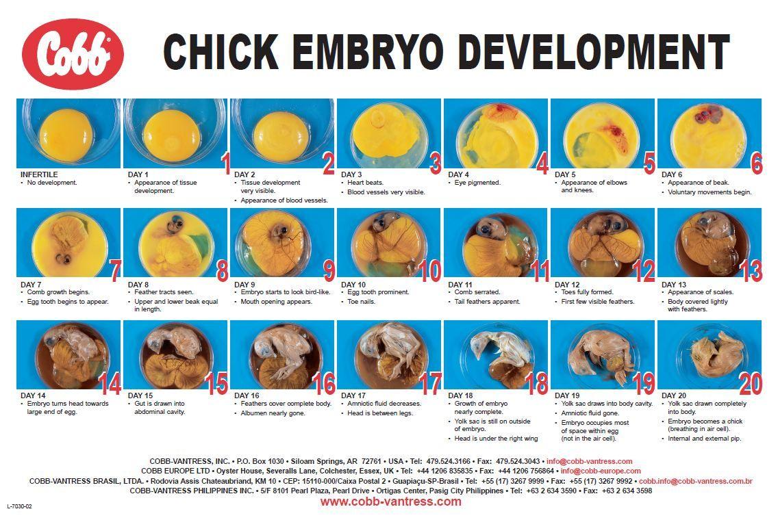 Larry Drake Larrydrakejr On Pinterest Egg Incubator Wiring Diagram