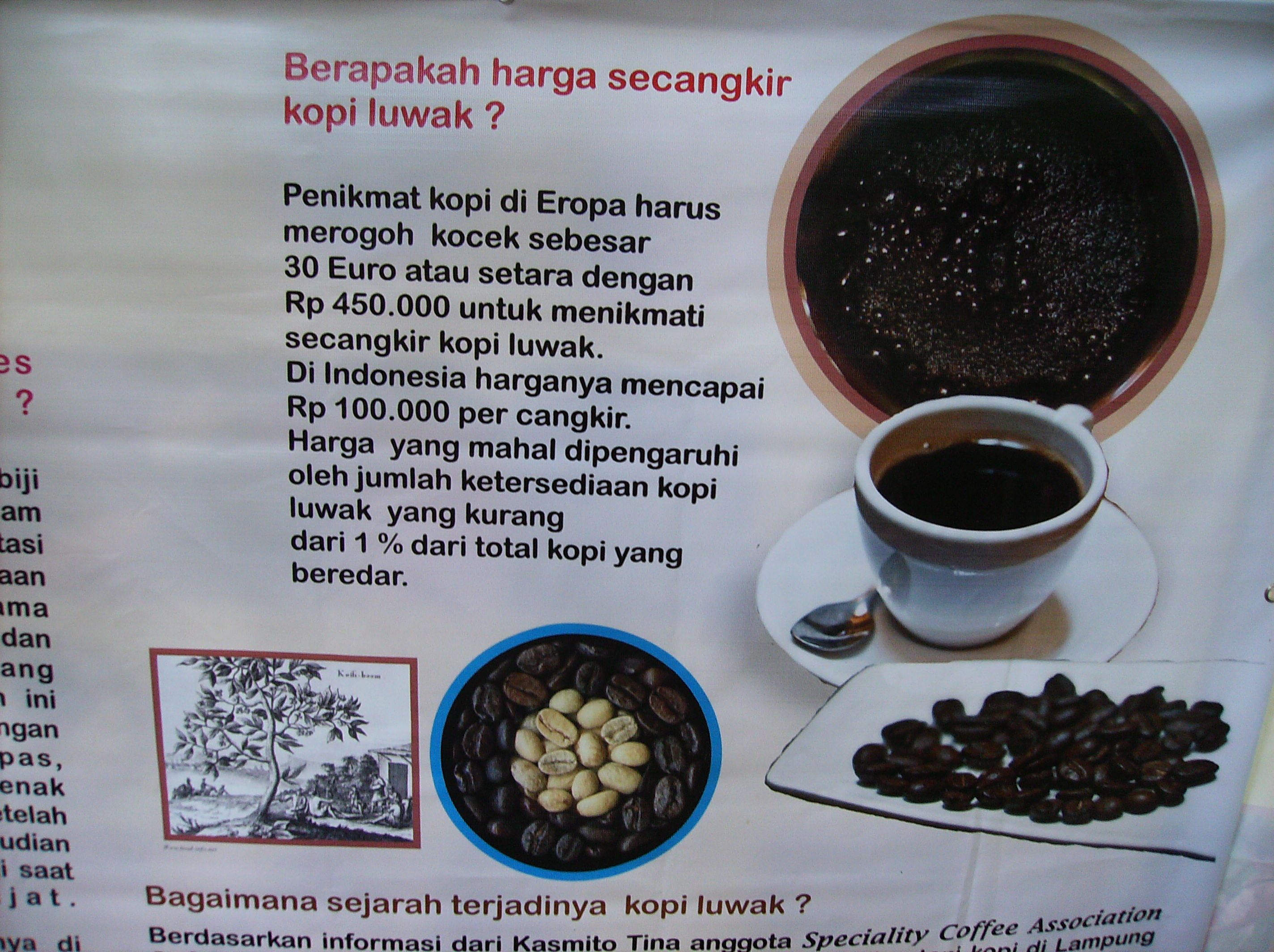 bean COFFEE Civet coffee, Asian palm civet, Eat