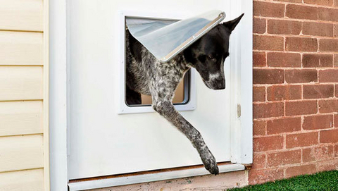 How To Make A Doggie Door Lets Face It Dogs Are Perverse If They