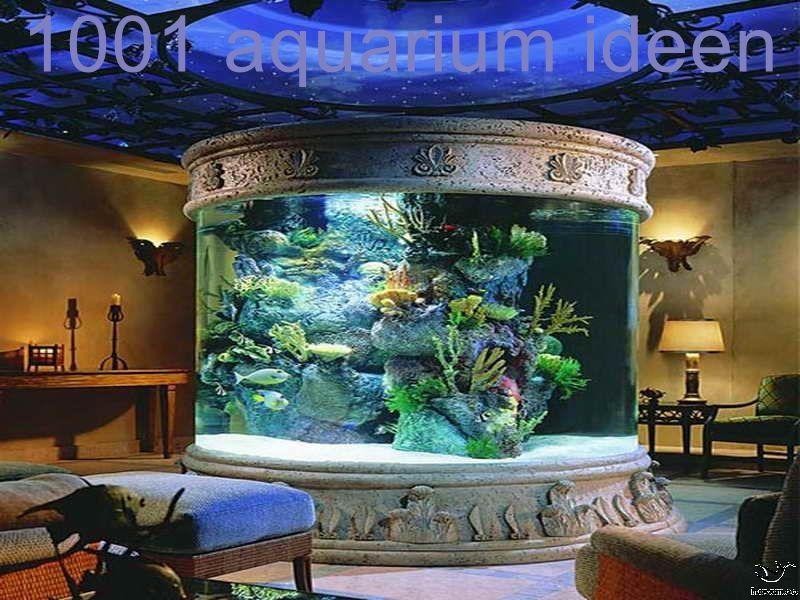 Aquarium Einrichten Ideen In 2020 Aquarium Design Amazing Aquariums Home Aquarium
