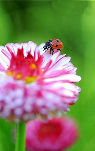 # ladybug #