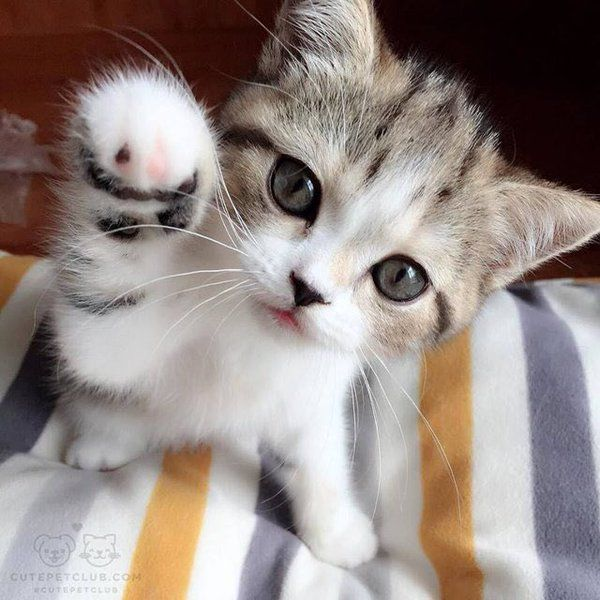 """Hol' still, hoomin, an' I punch oo!"""
