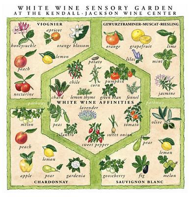 White Wine Sensory Garden Infographic