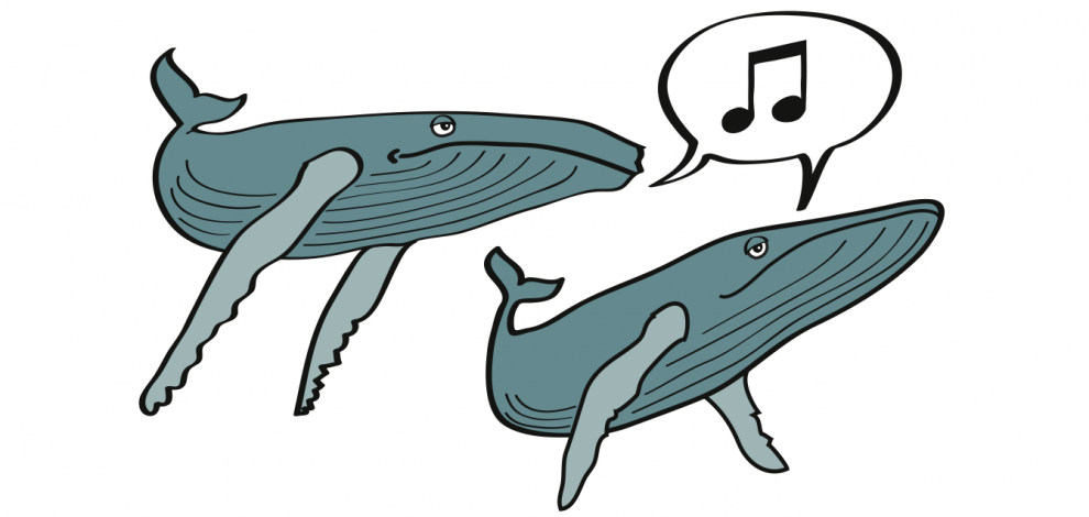 humpback whale facts - 990×470