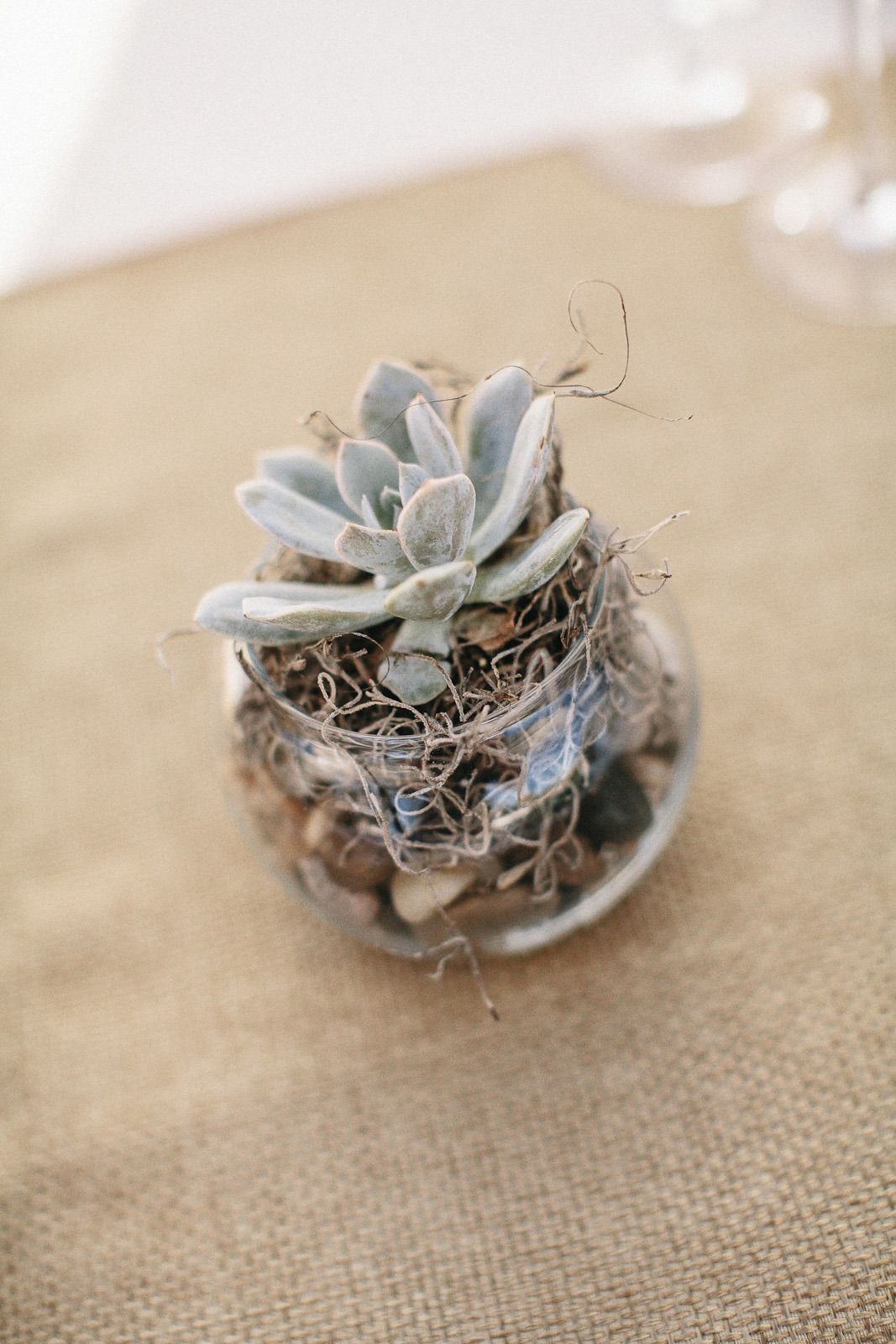 #succulent  Photography: Heather Elizabeth Photography - heatherelizabethphotography.com  Read More: http://www.stylemepretty.com/2014/06/24/a-sweet-lavender-infused-wedding-at-a-private-healdsburg-estate/
