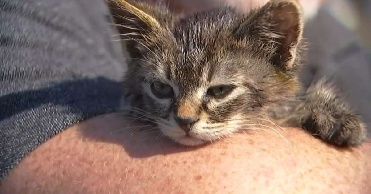 5 Week Old Kitten Named Sticky Found Glued To Busy Oregon Road Kitten Names Orange Tabby Cats Tabby Cat