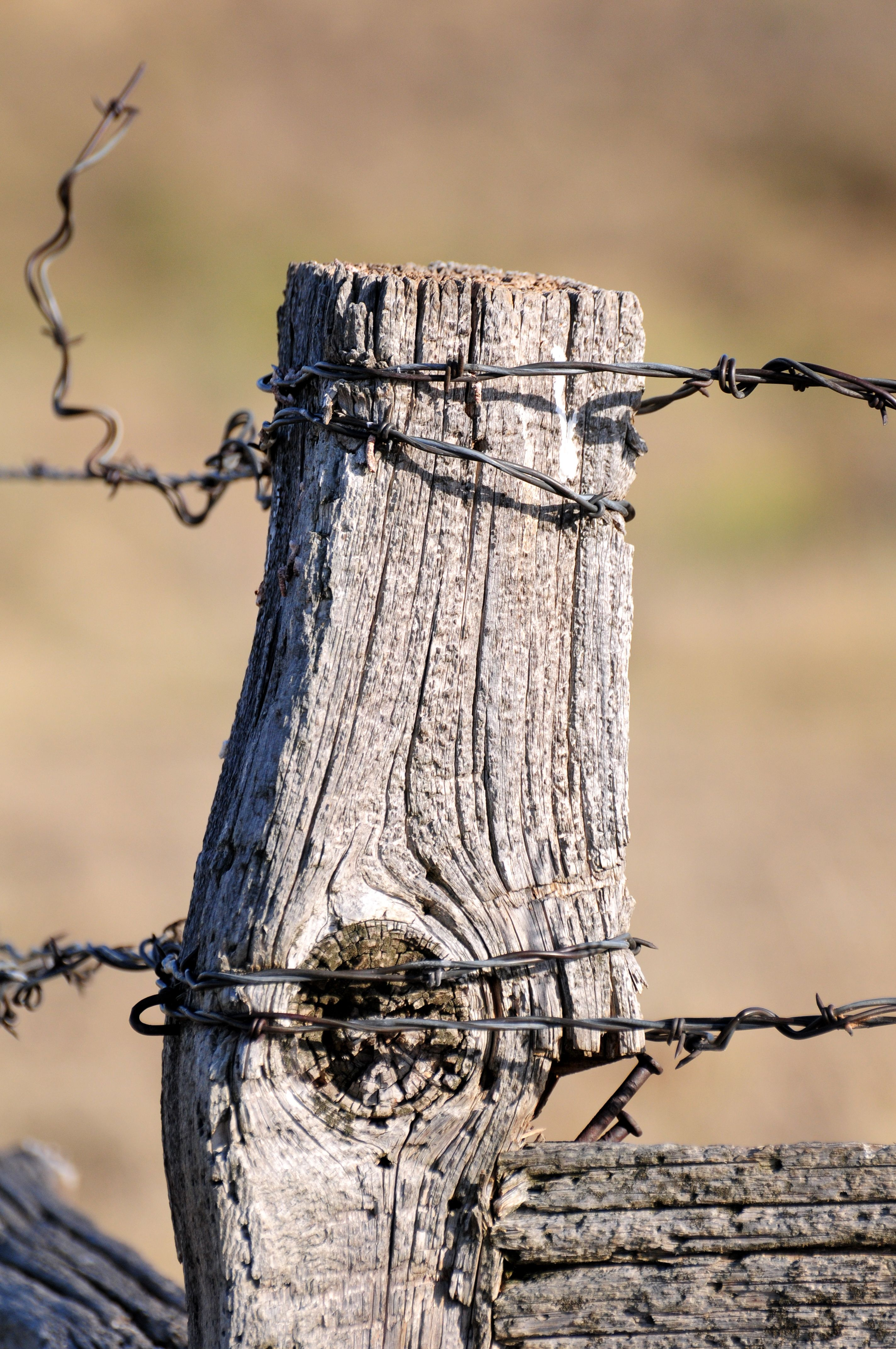 Old Fence Post With Barbed Wire Is A Strong Memory From My