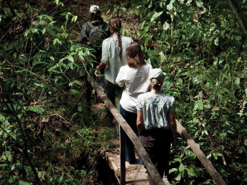 Puerto Maldonado Amazon Superior Lodge 3d/2n   Hike In The Heart Of The  Amazon