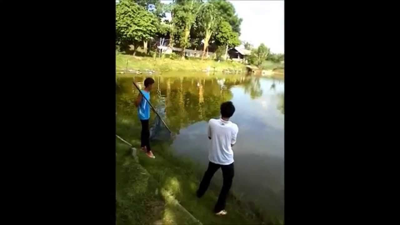 Giant Catfish fishing in thailand