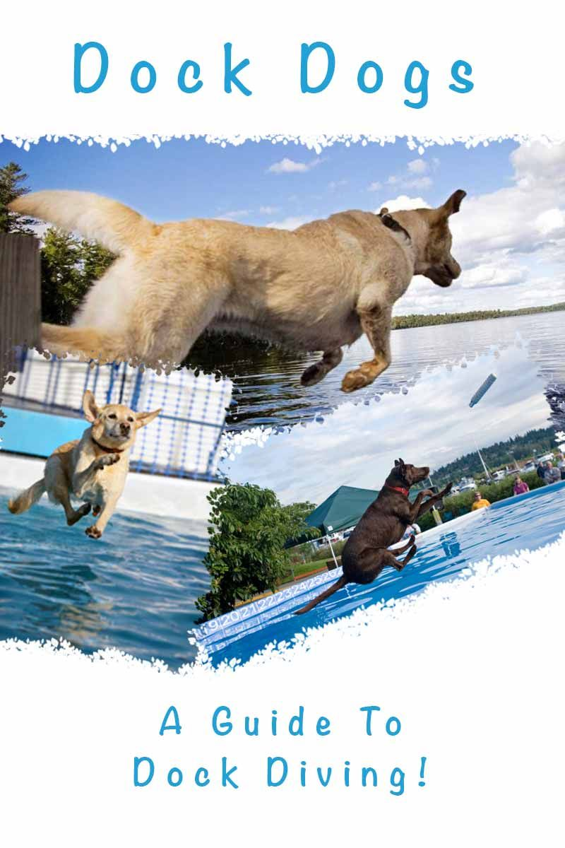 Dock Diving A Guide To Dock Diving From Jumping Dog Fun Facts