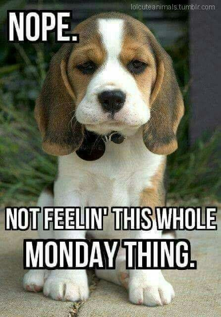 20 Happy Monday Memes Funny Monday Memes Morning Quotes Funny Monday Humor