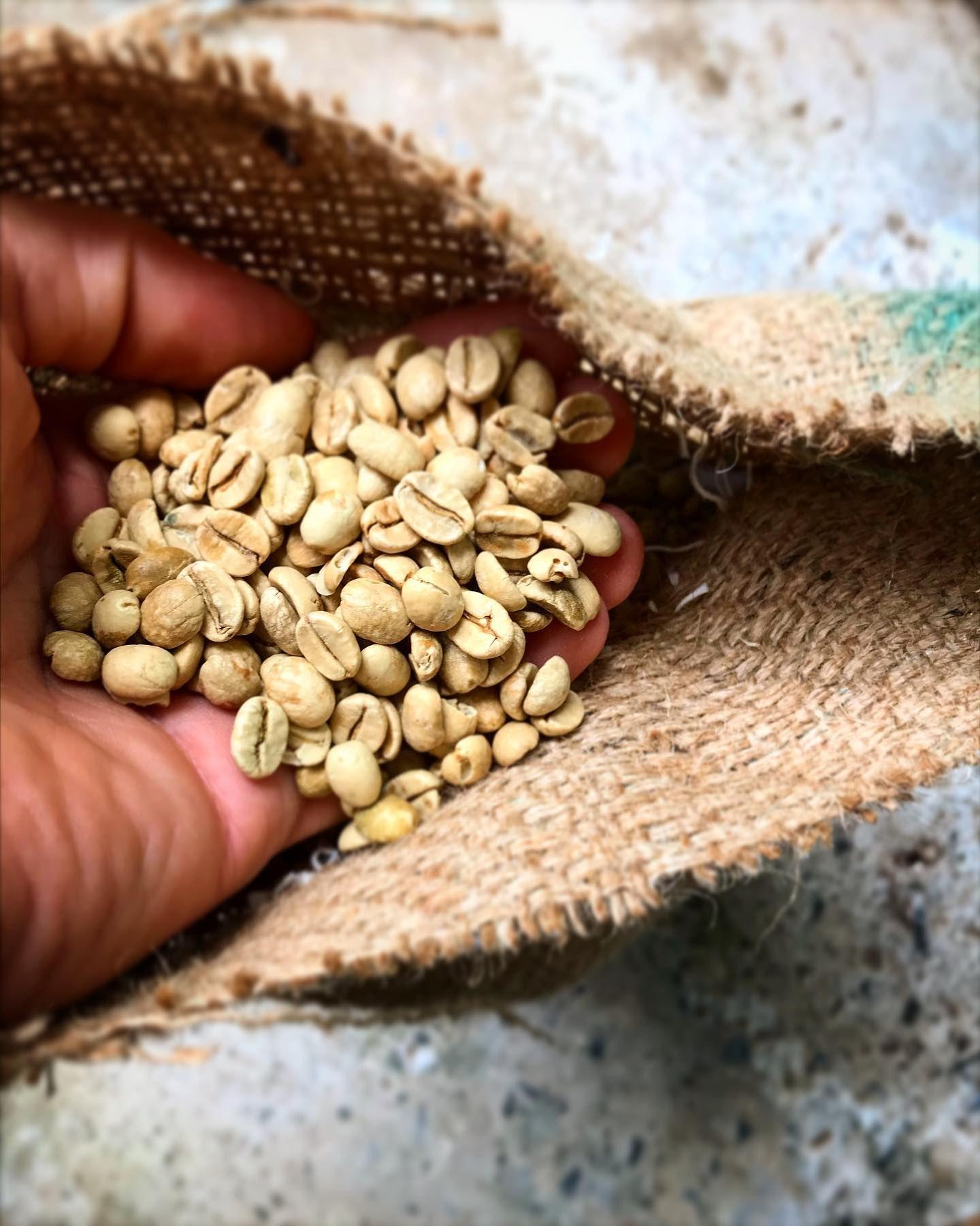 Aged coffee goes down surprisingly well        #coffee #coffeebeans #coffeelifestyle #coffeeroasters #greenbeans #artisancoffee #independentcoffee #specialitycoffee #coffeeaddict #coffeetime #butfirstcoffee #wales #coffeeholic #coffeeaddict #coffeegram #coffeelove #barista #baristalife #coffeelover #coffeelovers #coffeeoftheday #instacoffee #hotgingerguys #coffeeshots #라떼 #아이스아메리카노 #shrewsbury