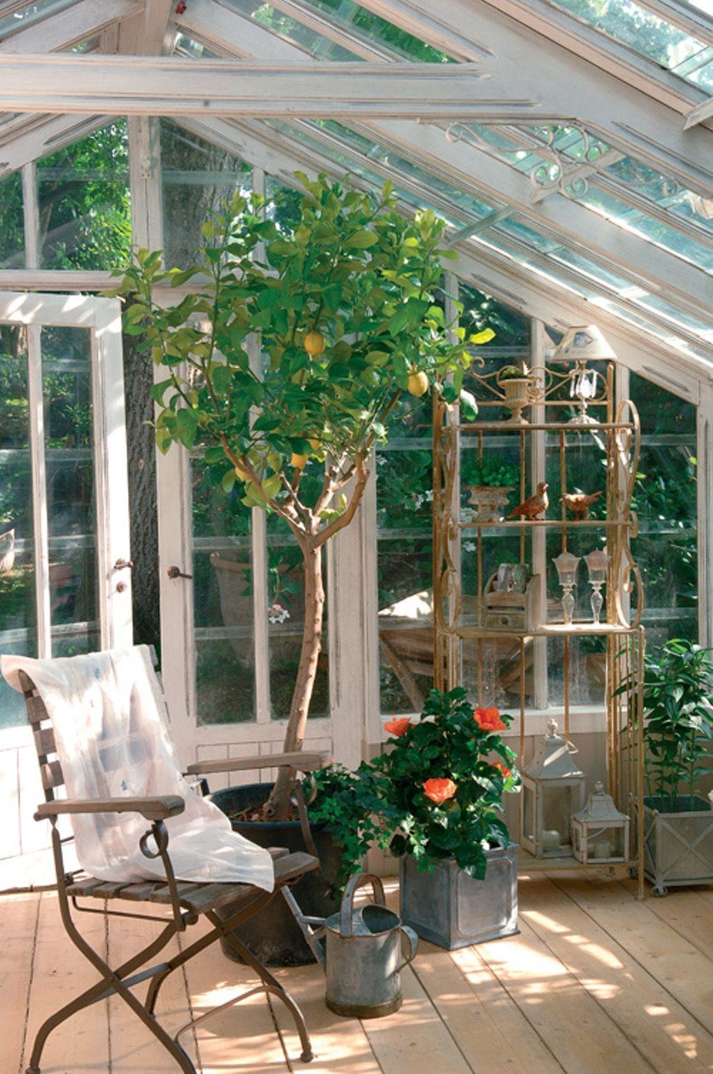 Giardino D Inverno In Vetro dans mon jardin d'hiver | giardino d'inverno, giardino di