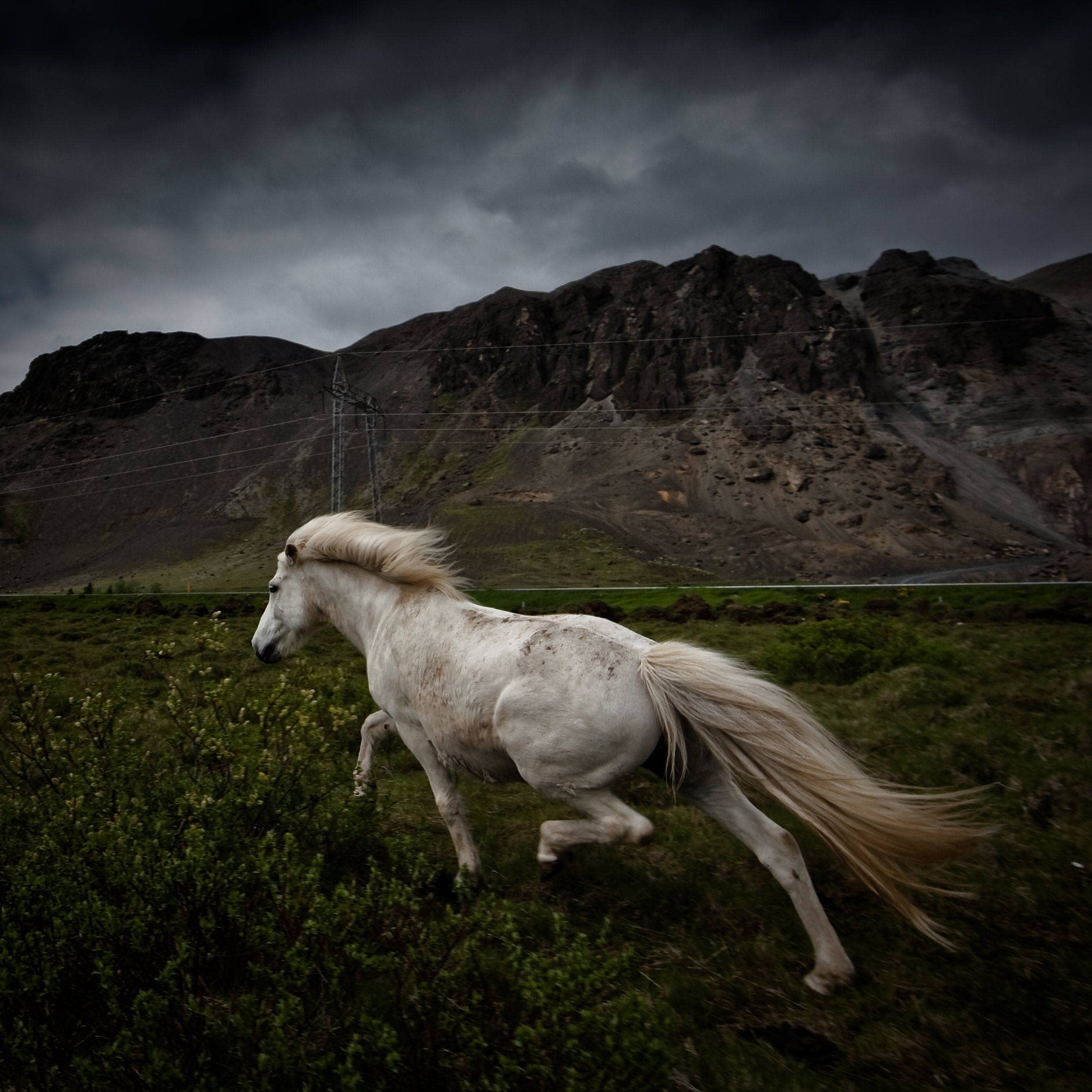 Wonderful Wallpaper Horse National Geographic - a8ff249e7b0f4e8775f3a11b5e2dcf9e  Best Photo Reference_355749.jpg