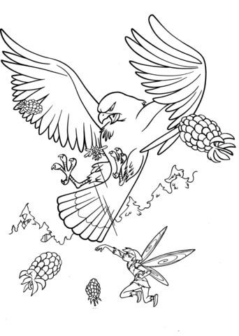 Big Hawk Coloring Page Tinkerbell Coloring Pages Coloring Pictures